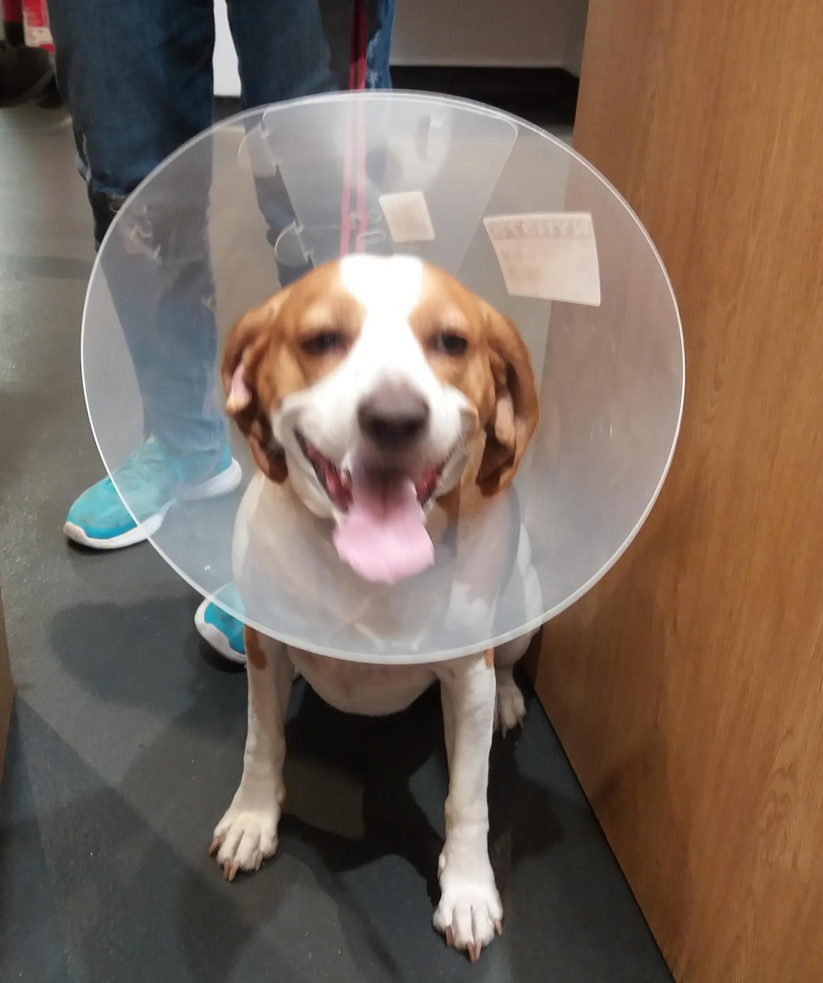 Dog in treatment