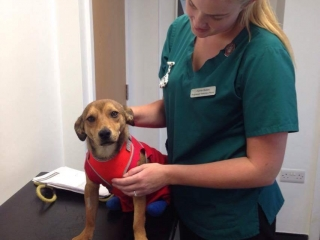 Dog in treatment room